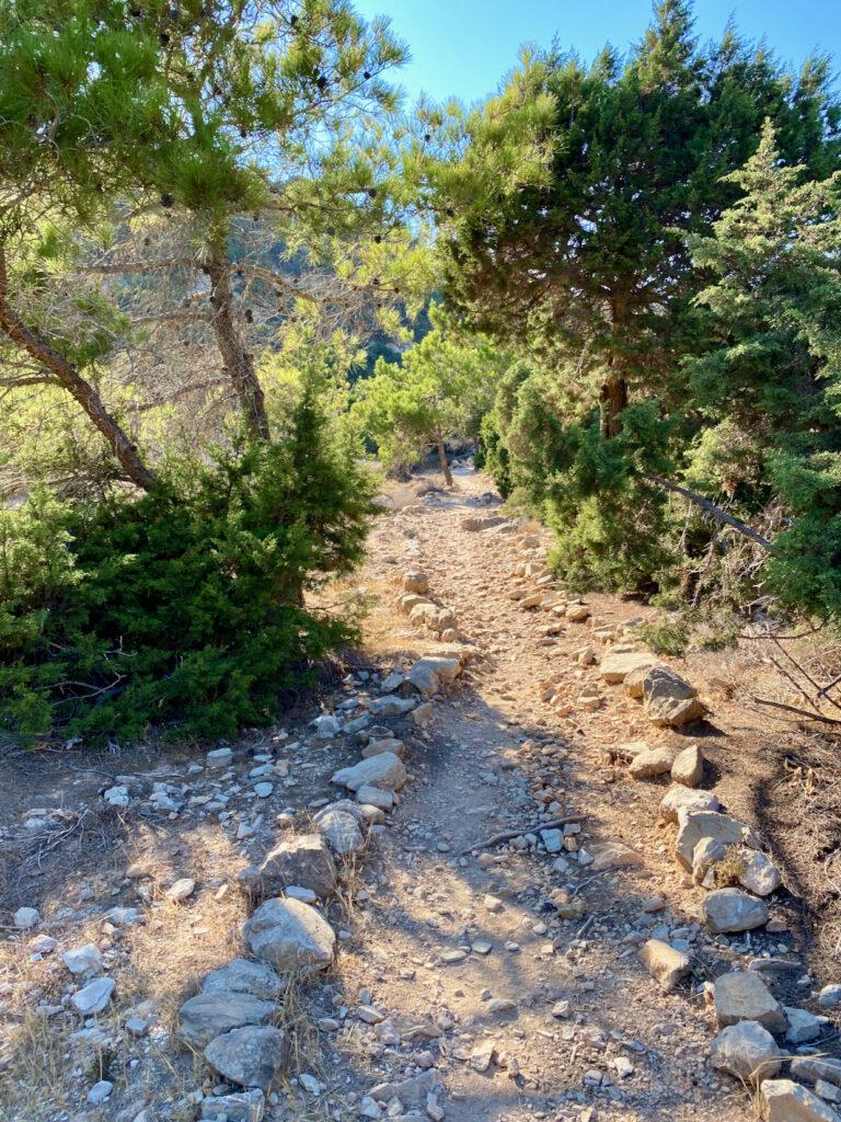 Wanderpfad durch den Wald